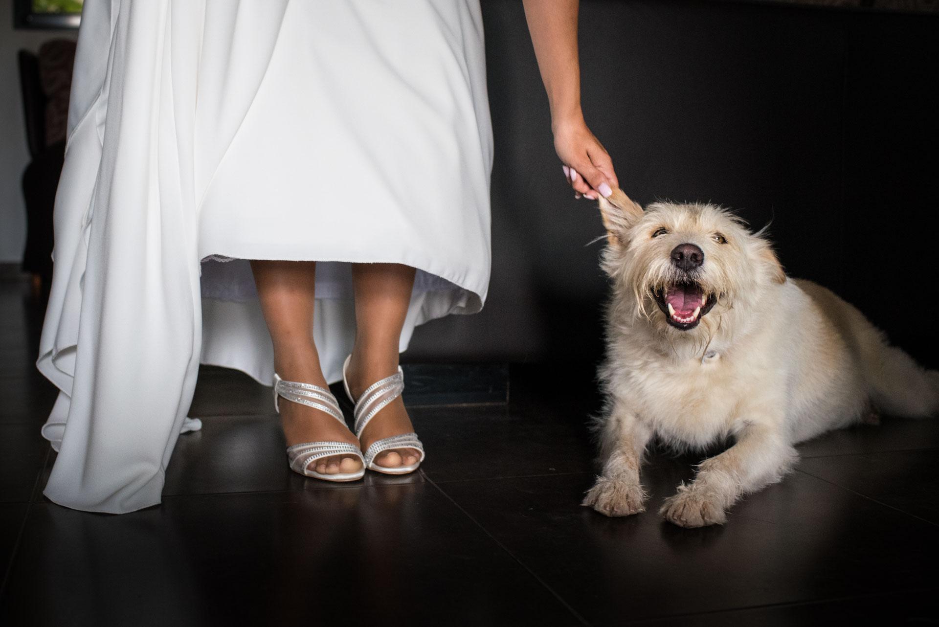 Novia y su perro. Boda en Masia Durba